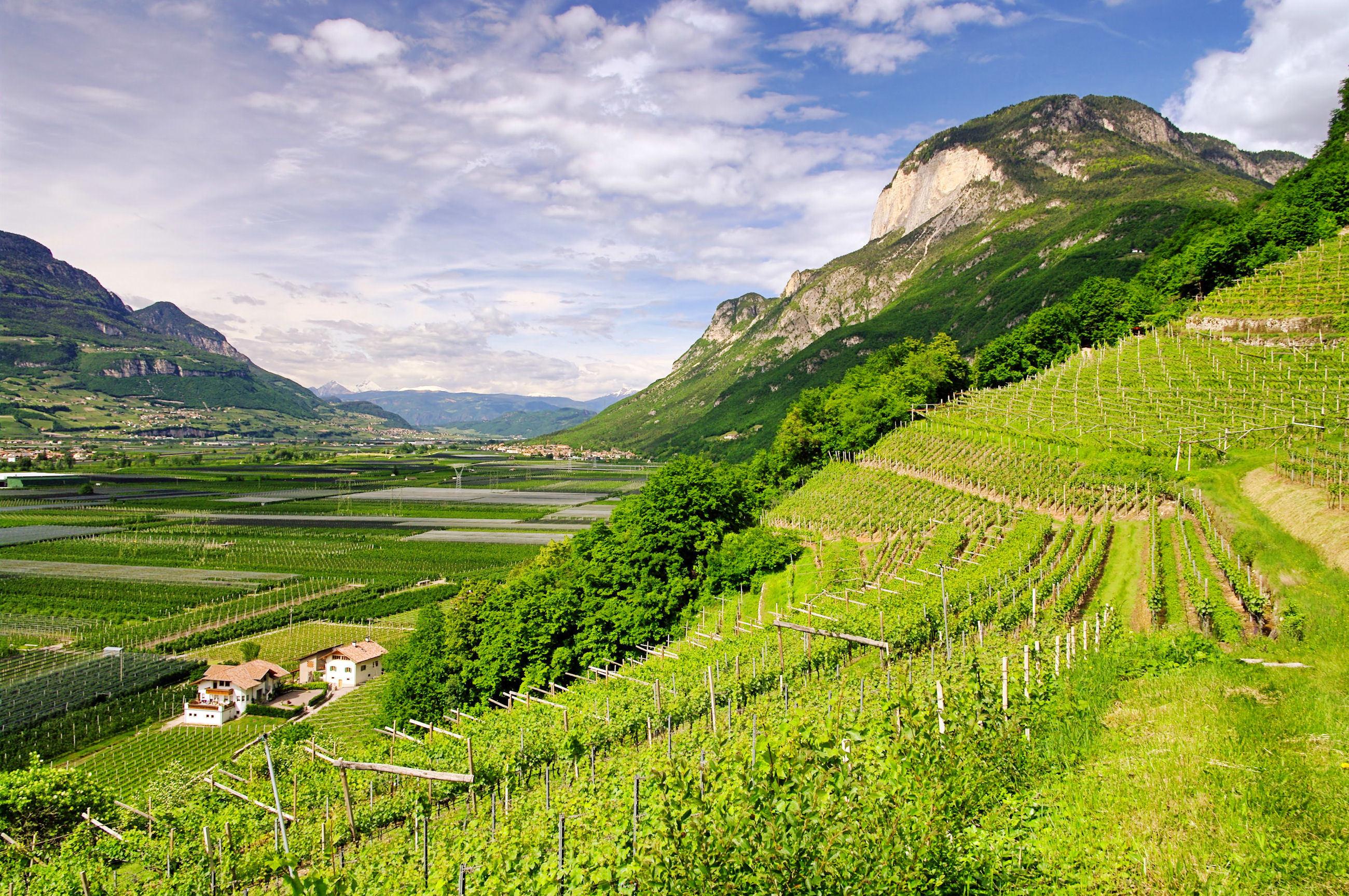 Autohtone sorte južnog Tirola